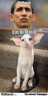 Maria Meme - cat di maria meme pmslweb