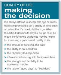 pet euthanasia pet euthanasia understanding euthanasia in pets