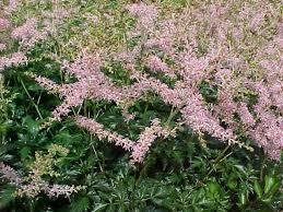 best perennials and ornamental grasses