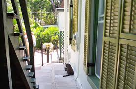 Hemingway House Key West Cats At Ernest Hemingway U0027s Key West House To Ride Out Hurricane
