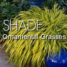shade perennials shade plants greatgardenplants
