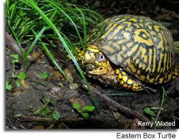 turtles in maryland maryland u0027s wild acres