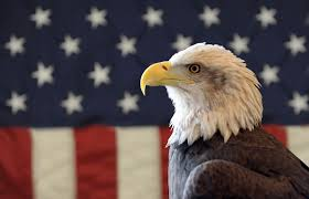 Hd American Flag American Flag With Eagle Pictures