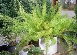 10 household plants that are dangerous to dogs and cats u2013 my