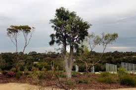 a non traditional australian garden stuff co nz
