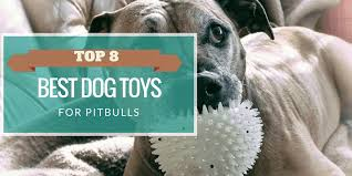 Seeking Pitbull 2018 S Top 8 Indestructible Best Toys For Pit Bulls You Ll Need