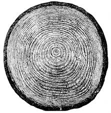 growth ring simple the free encyclopedia