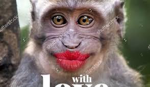 Funny Monkey Memes - ikea monkey funny meme daily funny memes