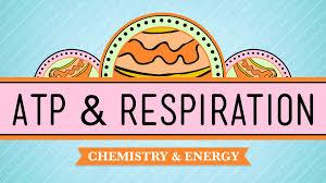 atp u0026 respiration crash course biology 7 youtube