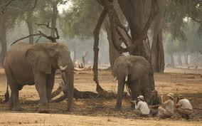 goliath safaris luxury tented camp mana pools zimbabwe