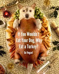 thanksgiving dog happy thanksgiving govegan net