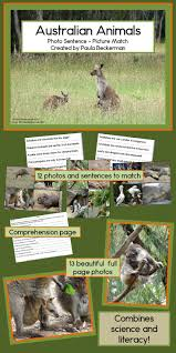 172 best australia theme images on pinterest australian animals