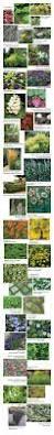 portland native plant list 125 best pacific northwest plants images on pinterest pacific