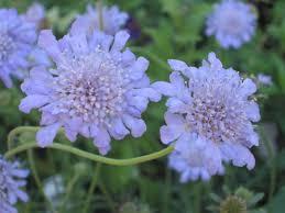 wedding flowers lavender blue wedding flower guide