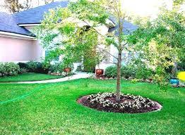 Tree Ideas For Backyard Backyard Tree Ideas Fruit Tree Garden Ideas Tips On Growing