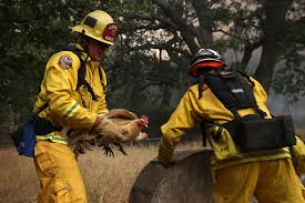 California Wildfire Rocky Fire by Forest Fires Rage In Drought Stricken Northern California Photo