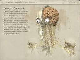 leonardo da vinci anatomy review educational app store
