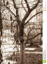 rainy day in the winter garden sepia stock photo image 47338464