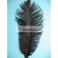 Ostrich Feather Centerpieces Wholesale by White Ostrich Feathers Plumes Wholesale Dozen Bulk 22 24 Inch 12