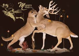 Murphy 39 s wildlife art bronze award winning taxidermist