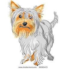 sketch funny dog yorkshire terrier breed stock vector 435137131