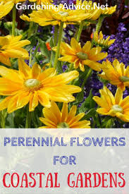 different kinds of flowers suitable for coastal gardening