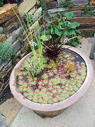 Container Water Garden Ideas Mulderranch