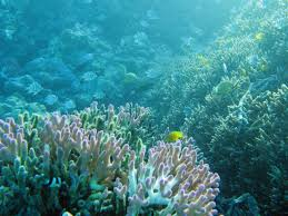 free image of pink finger coral