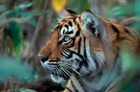 this month the tiger team have been mostly u2013 eia international