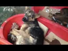 chien cuisiné un marché de chiens vivants en chine