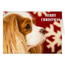 cavalier king charles spaniel cards invitations greeting