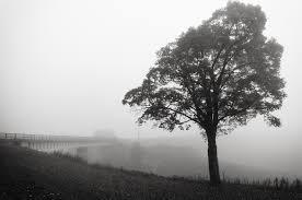 black and white tree photos 2012 trevor labarge