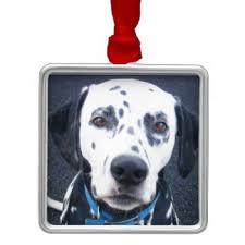 spotted dog christmas tree decorations u0026 ornaments zazzle co uk