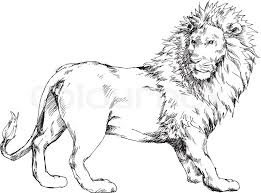 drawn hand lion pencil and in color drawn hand lion