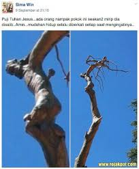 the jesus tree of lebanon miracle explained the rojak pot