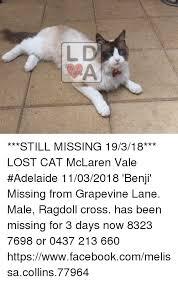 Lost Cat Meme - l d still missing 19318 lost cat mclaren vale adelaide