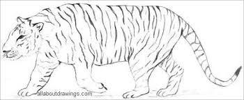 distinctive tiger drawing