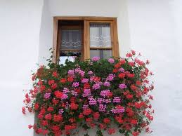 Window Flower Boxes Window Planter Box With Pink And Red Flowers Decorative Outdoor