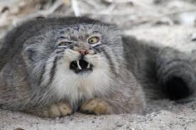 Grumpy Face Meme - meme template search imgflip
