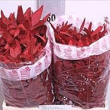 Wholesale Flowers Online 100 Cheap Wholesale Flowers Online Vines Real Flowers