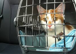 how to travel with a cat images Secrets to successful car travel with cats jpg