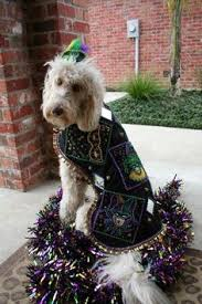 mardi gras jester ribbon dog mardi gras i had to pin this it brought back memories of my