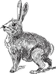 clipart rabbit