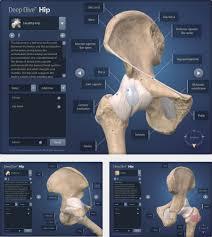 3d Knee Anatomy Deep Dive Hip Understand Com Medical Education