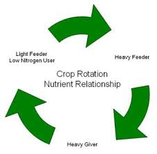 vegetable nutrient relationship crop rotation