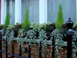 Plants For Winter Window Boxes - 9 best window boxes images on pinterest winter window boxes