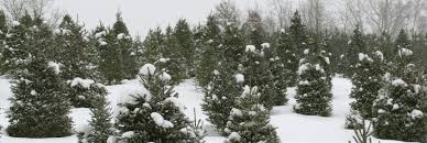 Cut Your Own Christmas Tree Experience Grand Rapids Events