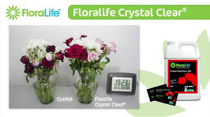 flower food packets floralife clear also known as flower food clear 300