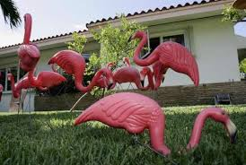 why the plastic flamingo is the official bird of