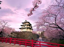 125 best cherry blossom trees in images on